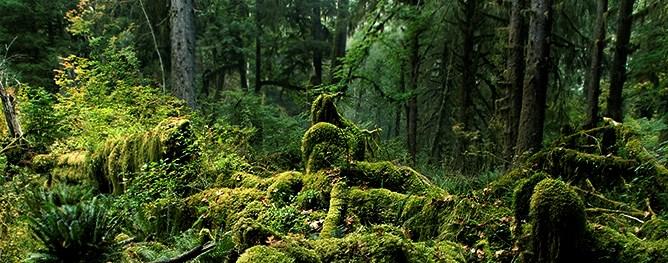 best national parks for backpacking